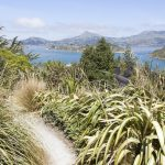 Things to do in Dunedin New Zealand